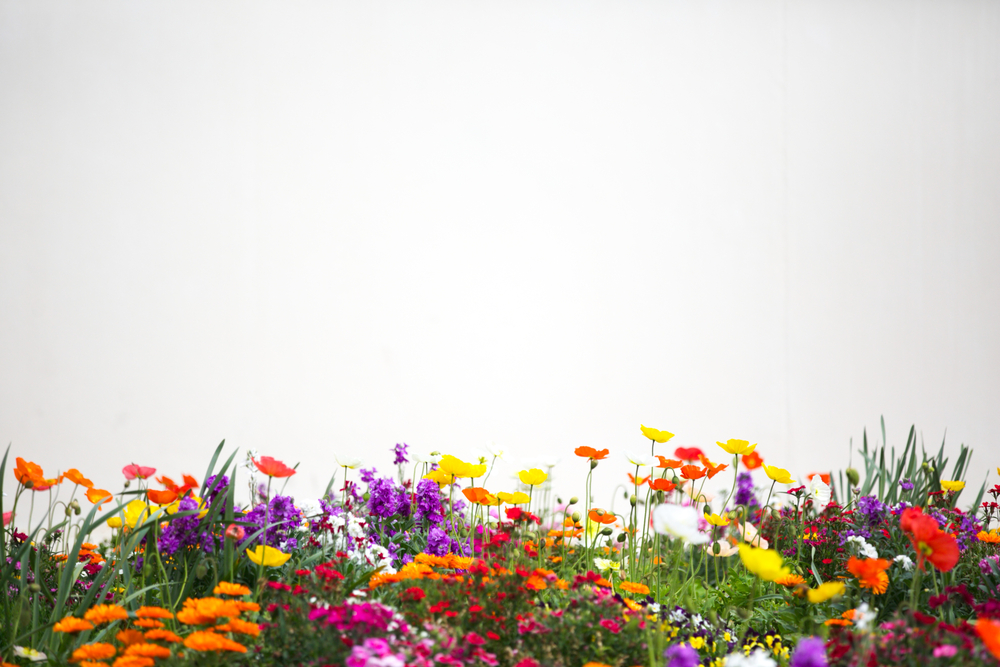 Flower bed with diverse flower types and colours to illustrate a pluralistic approach.