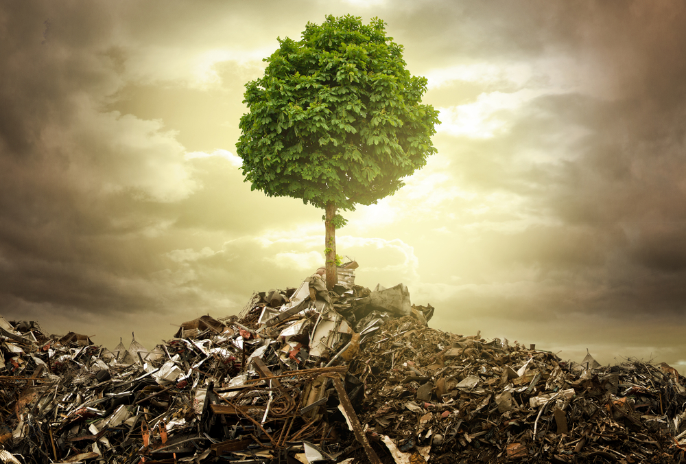 Tree growing in a scrap yard to illustrate adult survivors of childhood abuse